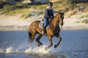 Frau reitet ein Pferd mit Reithose